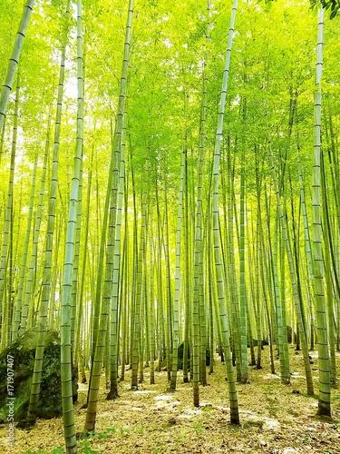 Fotobehang Bamboe Bamboo forest