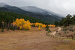 Mountain Dirt Road Through Yellow Aspen Trees in Autumn