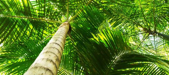 Fundo com palmeiras.