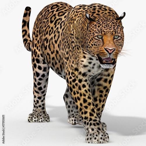Fototapeta Leopard (3d)