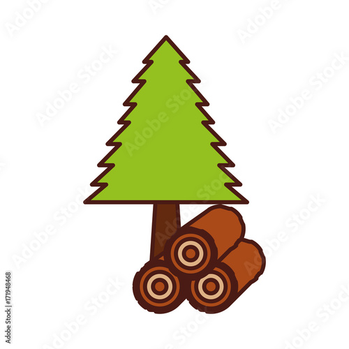 pine tree forest natural flora image vector illustration