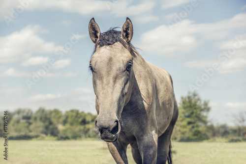 Beautiful horse in field with cloudy sky. Poster