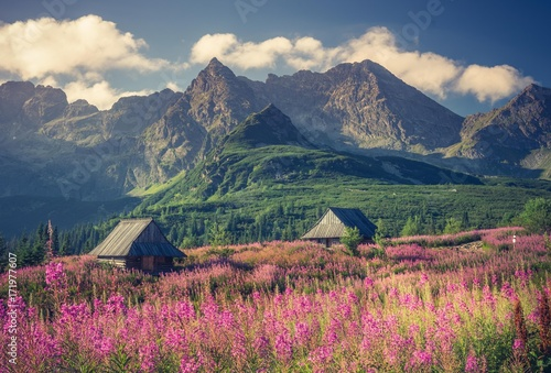 Zdjęcia na płótnie, fototapety na wymiar, obrazy na ścianę : Tatra mountains, Poland landscape, colorful flowers and cottages in Gasienicowa valley (Hala Gasienicowa), summer