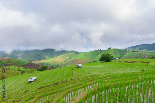 Foto op Plexiglas Rijstvelden view of green rice fields terrace mountain with cottage in countryside Land with grown plants of paddy and sea of fog at Pa Pong Piang, Thailand