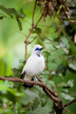 White exotic bird sitting on a branch - 172013052