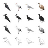 Forest bird, woodpecker, stork, seagull, vulture. Bird set collection icons in cartoon black monochrome outline style vector symbol stock illustration web.