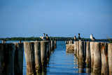 Birds, pier and sea at Tampa