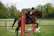 Horse Jump - 172032636