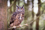Eurasian Eagle Owl - 172036242