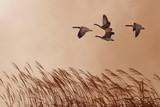 Birds in flight against bright autumn background