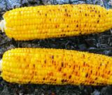 Corn Cob - 172043047