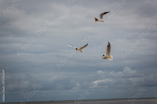 Deurstickers Noordzee Möwe