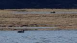 Aves silvestres en laguna verde - 172063216