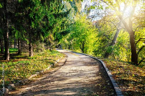 Wall mural Asphalt path in green park