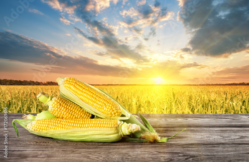 Fotobehang Oranje Ripe corn on table in the background of cornfield at sunset