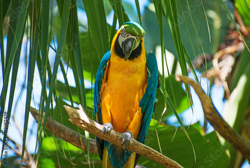 Portrait of colorful Ara parrot on the tree.