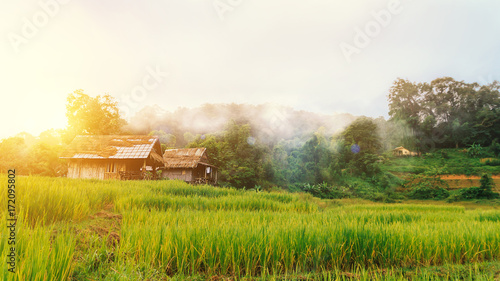 Foto op Aluminium Rijstvelden landscape of green terraced rice field and small hut at countryside with beautiful fog around mountain nature background in the morning with wonderful golden light. Simple life of rural people in Asia