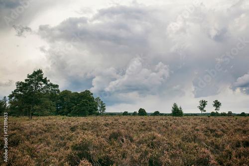 Poster Wit Moorland under dark stormy sky.