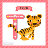 Letter T uppercase cute children colorful zoo and animals ABC alphabet tracing flashcard of Standing Tiger for kids learning English vocabulary and handwriting vector illustration.