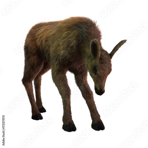Poster Antilope 3D Rendering Moose Calf on White