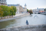 Pigeon on a bridge with river Seine in the background in Paris, France