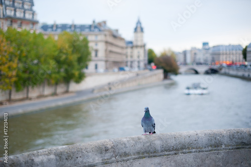 Fridge magnet Pigeon on a bridge with river Seine in the background in Paris, France
