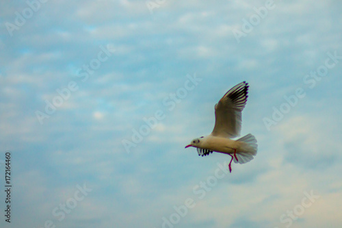 gull flying against the cloudy sky background Poster
