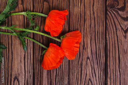 Keuken foto achterwand Klaprozen Red poppy on wood