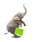 Funny obese shopper going to supermarket in Black Friday for low cost shopping. Elephant as a icon on white background.  - 172186676