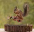 squirrel is sitting on a violin