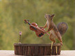 squirrel playing on a violin