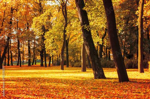 Poster Oranje eclat Autumn picturesque landscape - spreading autumn tree with fallen yellow autumn leaves under sunlight