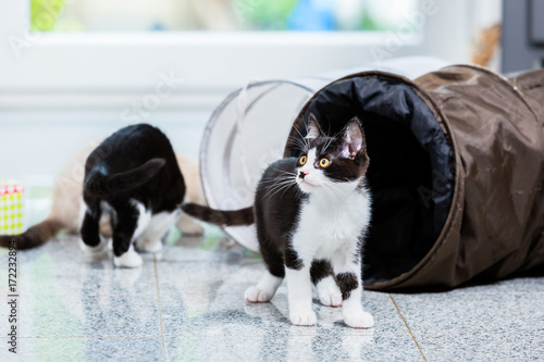 Cute cats with playing tunnel on floor of apartment