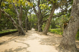 Path between trees in the Botanic Garden in Rio de Janeiro Brazil - 172274014