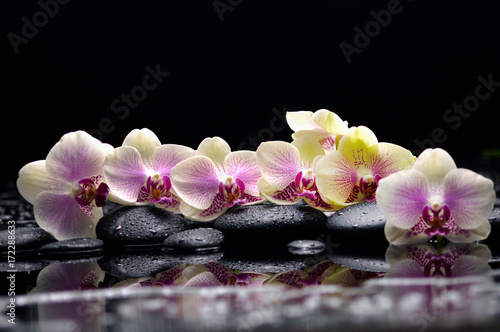 Beautiful set of orchid with therapy stones