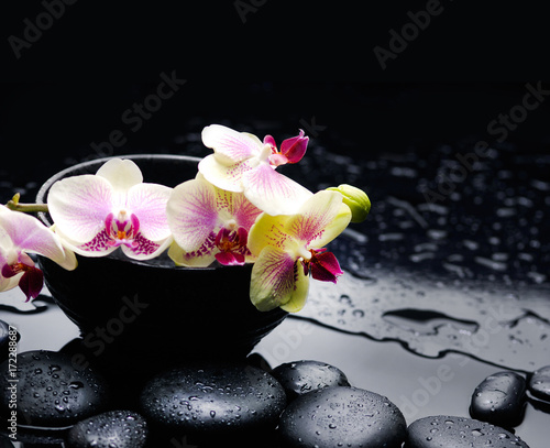 Poster Spa orchid in bowl with black stones on wet pebbles