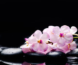 Lying on branch white orchid with black stones on wet pebbles  - 172288808