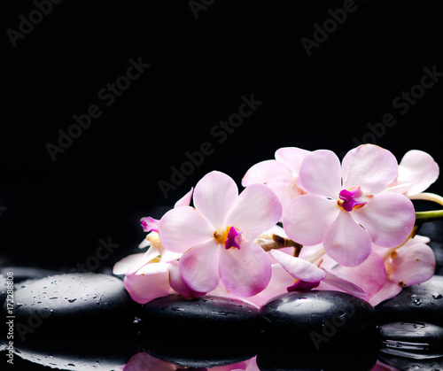 Keuken foto achterwand Spa Lying on branch white orchid with black stones on wet pebbles