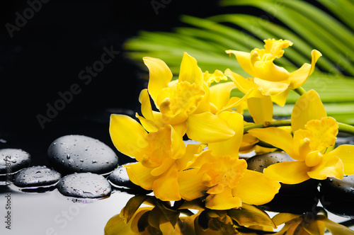 Yellow orchid with palm and stones on wet background