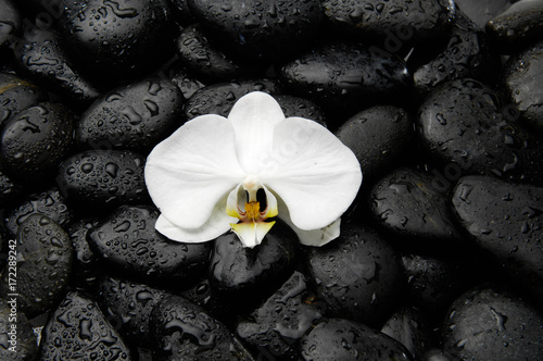 Macro of white orchid on wet black wet stones