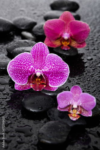 Keuken foto achterwand Spa still life with three orchid on black stones