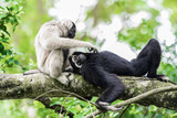 Monkeys are playing on a tree. - 172311234