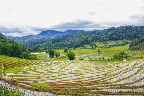 Foto op Aluminium Rijstvelden terraced Rice fields on the hill In the Rainy season with blue Cloud sky background