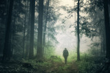 Man walking alone in magical dark green colored foggy wild forest landscape. - 172329869