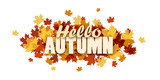 HELLO AUTUMN banner with leaves - 172342065