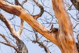 Large Dry Tree Bark Peeling Skin - 172350282