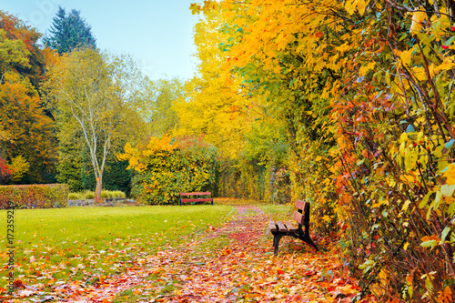 Tuinposter Herfst Colorful autumn park in sunny day and wood bench.