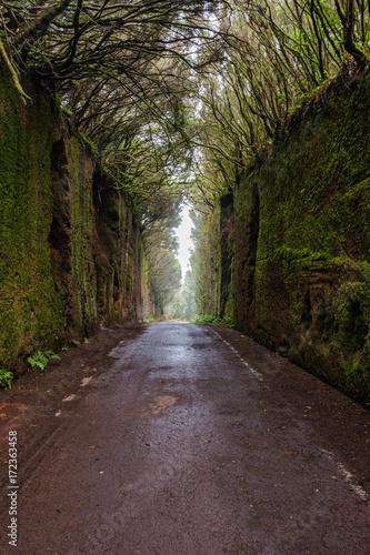 Deurstickers Canarische Eilanden Green wall