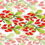 Watercolor barberry - 172389851