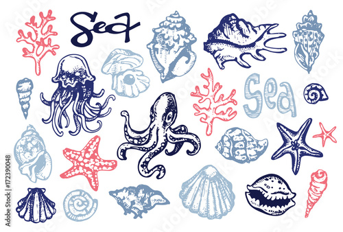 Keuken foto achterwand Vlinders in Grunge Hand drawn doodle sea illustration. Shell. Undersea.